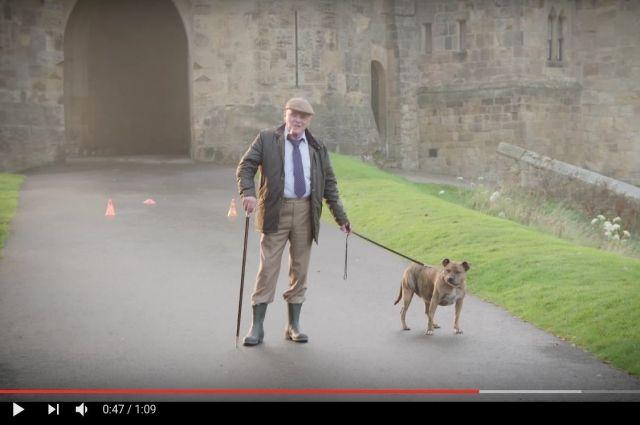 Самая одинокая в мире собака появится в «Трансформерах-5»