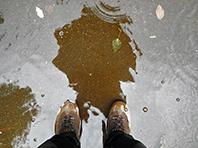Нынешний август признан самым мокрым с начала века