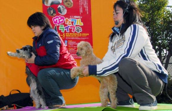 В Гонконге поставили рекорд по йоге с собаками