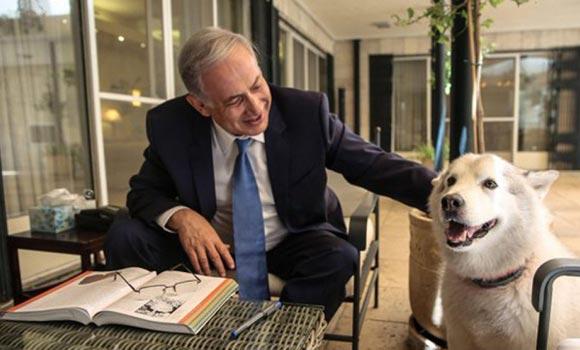 Премьер-министр Израиля поступил со своей собакой согласно закону