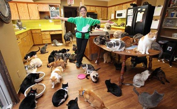 Американка уступила свой дом кошкам и стала жить в трейлере